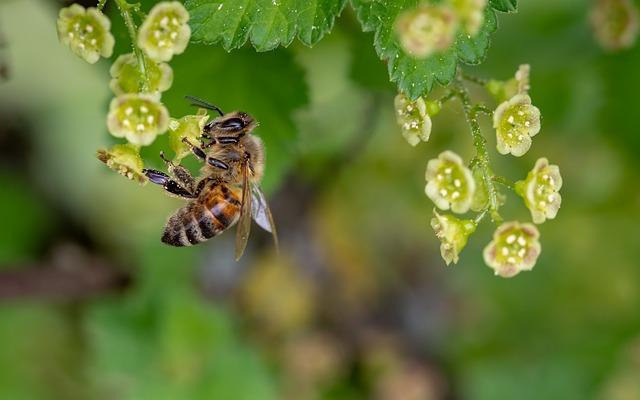 ralentir la disparition des abeilles